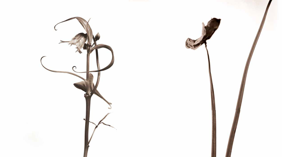 Flor Exflor - Hugo Curti